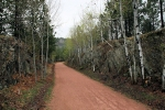 Aspen-Lined Trail