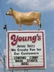 Young's Dairy